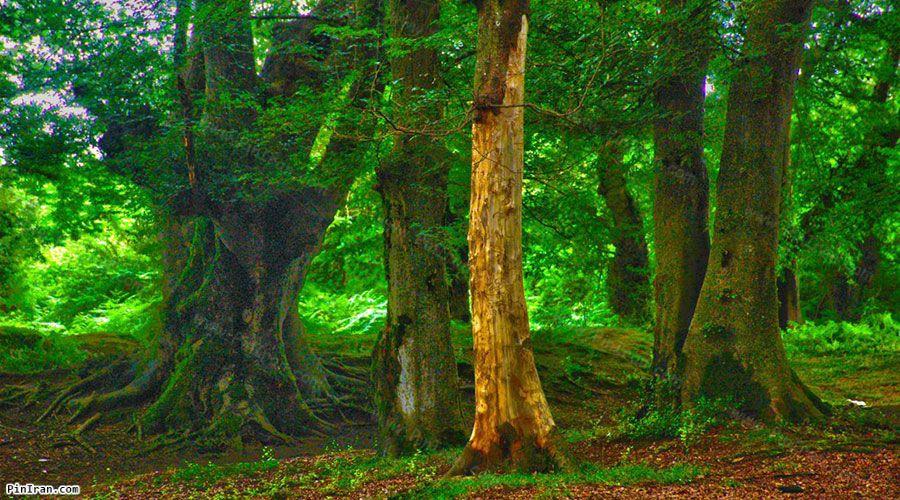Anzali Forest Park 1