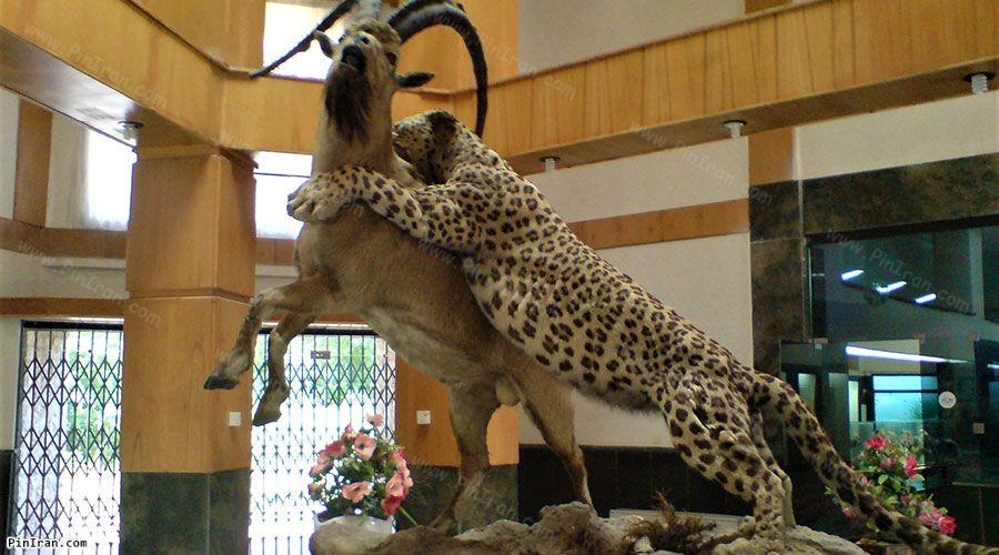 Ardebil Wildlife Museum 1
