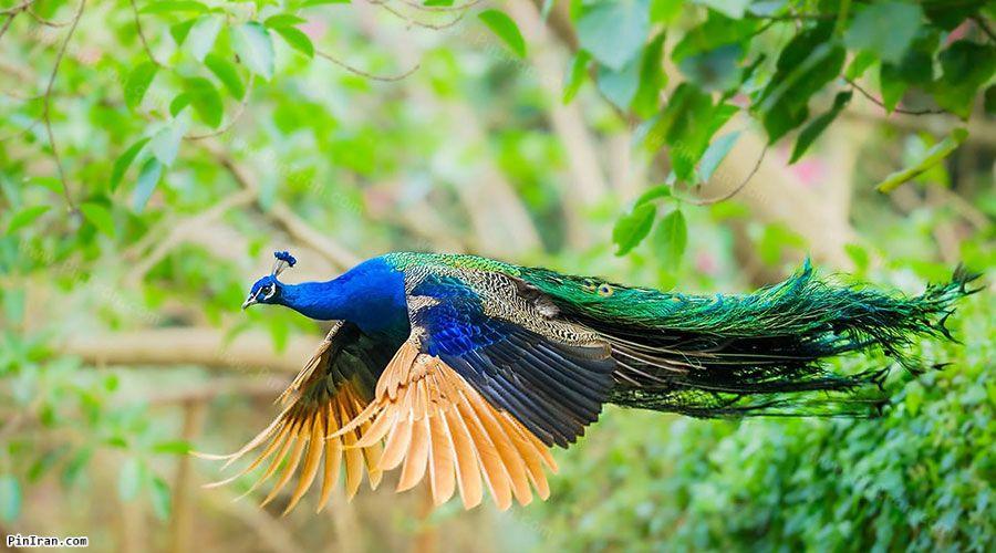 Astara Bird Park 1