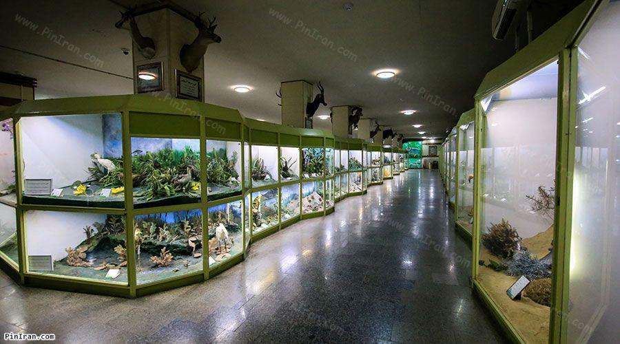 Hamadan Museum Natural History 1