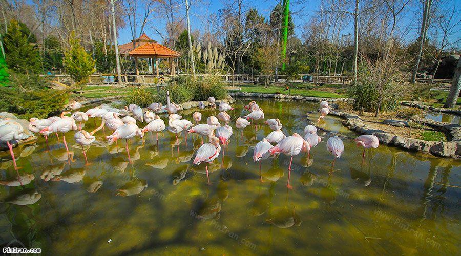 Isfahan Birds Garden 1