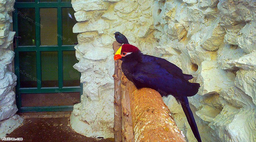 Isfahan Birds Garden 3