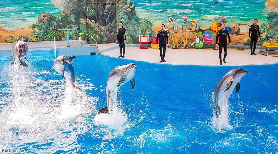 Kish Dolphin Park 1