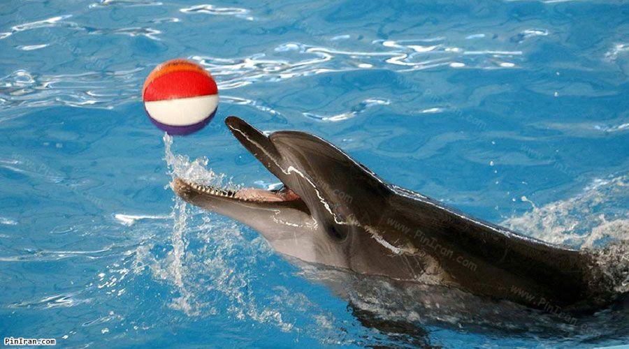 Kish Dolphin Park 2