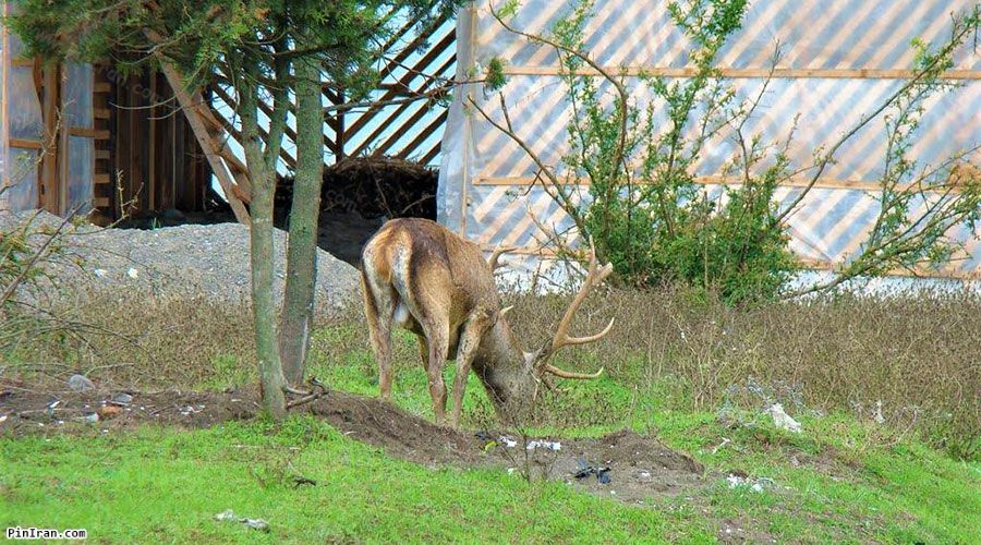 Lavandevil Wildlife Refuge 1