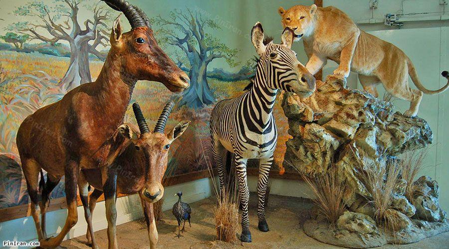 Semnan Natural History Museum 1