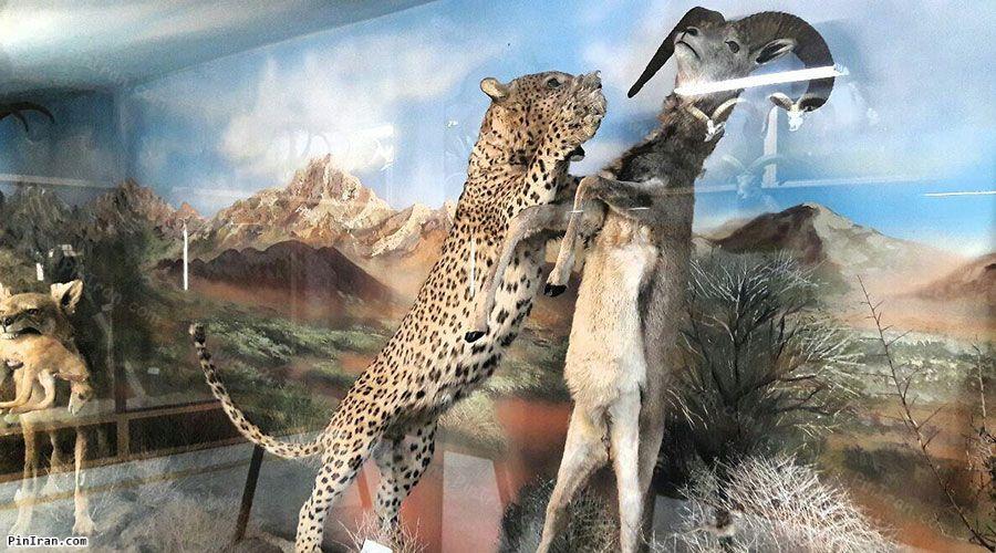 Semnan Natural History Museum 2