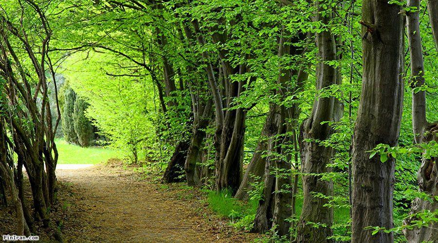 Sisangan Forest Park 1