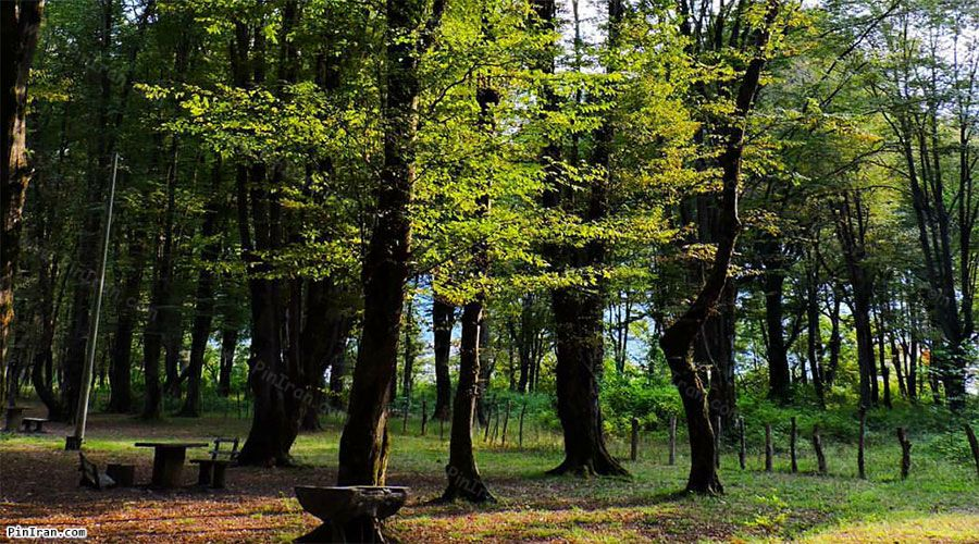 Sisangan Forest Park 2
