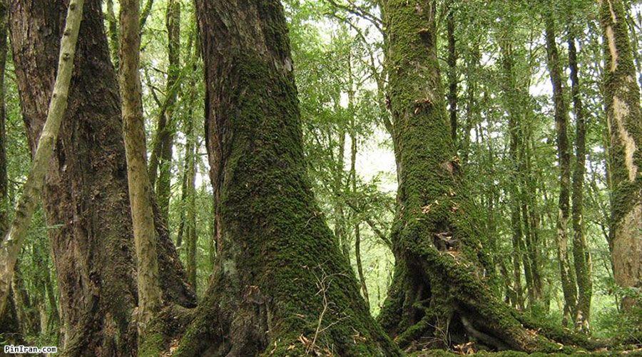 Sisangan Forest Park 3