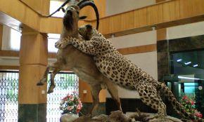 Ardebil Wildlife Museum