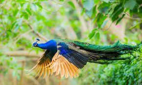 Astara Bird Park