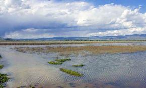Bisheh Dalan Wetland