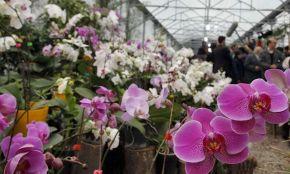 Nowshahr Botanical Garden