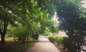 Rasht Mellat Park