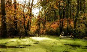 Saravan Forest Park
