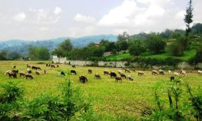 Shiadeh Village
