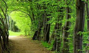 Sisangan Forest Park